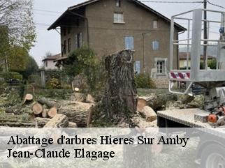 Abattage d'arbres  hieres-sur-amby-38118 Elagage Mathurin